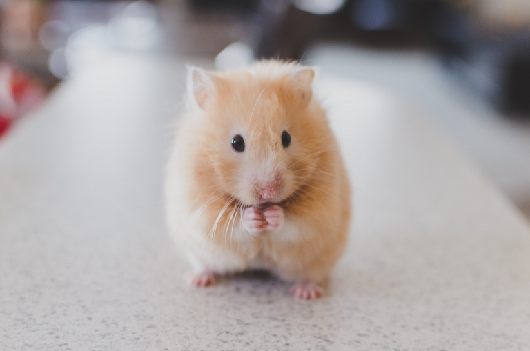 Tierschutz-Maus
